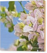 Beautiful Bougainvillea Flowers Against Blue Sky Wood Print
