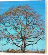 Beautiful Branching Wood Print