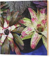 Beautiful Bromeliads Wood Print