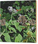 Beautiful Buckeyes Wood Print