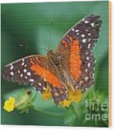 Red Anartia Butterfly 1 Wood Print
