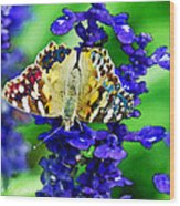 Beautiful Butterfly On A Flower Wood Print