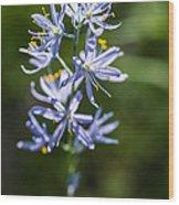 Beautiful Camas Lily In Idaho Wood Print