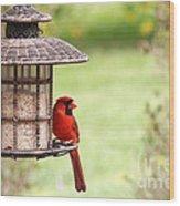 Beautiful Cardinal Wood Print