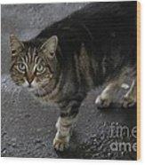 Beautiful Cat Wood Print