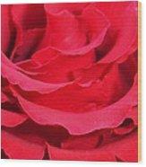 Beautiful Close Up Of Red Rose Petals  Wood Print
