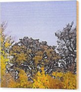 Beautiful Colorful Autumn Leaves Wood Print