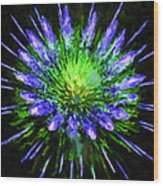 Beautiful Colorful Holiday Fireworks 1 Wood Print