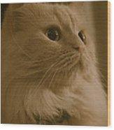 Beautiful Creamy Persian Cat Mix Portrait Wood Print