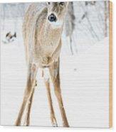 Beautiful Deer Wood Print