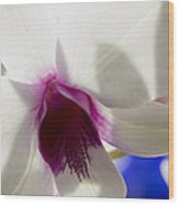 Beautiful Dendrobium Orchid Wood Print