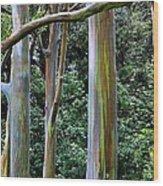 Beautiful Eucalyptus Wood Print
