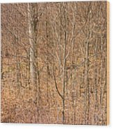 Beautiful Fine Structure Of Trees Brown And Orange Wood Print