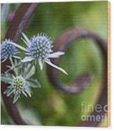 Beautiful Flower Buds Wood Print