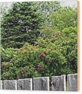 Beautiful Front Yard - Roses - Trees Wood Print