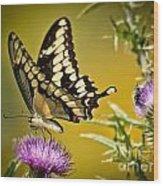 Beautiful Golden Swallowtail Wood Print