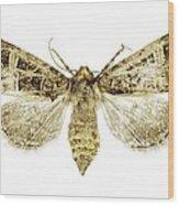 Beautiful Gothic Moth Wood Print