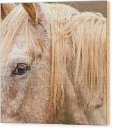 Beautiful Gray Horse Portrait Wood Print