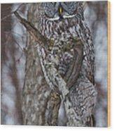 Beautiful Great Gray Wood Print