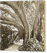 Beautiful Griffith Park Huge Trunk Tree Sepia Black White Vintage Earthy Fine Art Decorative Print Wood Print by Marie Christine Belkadi