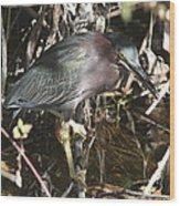 Beautiful Heron Wood Print