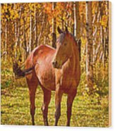 Beautiful Horse In The Autumn Aspen Colors Wood Print by James BO  Insogna