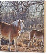 Beautiful Horses Wood Print