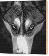 Beautiful Husky Wood Print by Karen Lewis