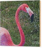 Beautiful In Pink Wood Print
