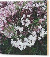 Beautiful Jasmine Flowers In Full Bloom Wood Print