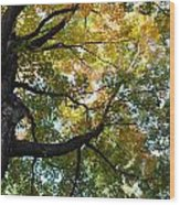 Beautiful Leaf Blanket Wood Print