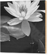 Beautiful Lilly Wood Print