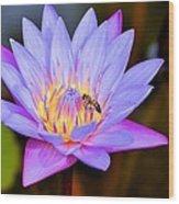 Beautiful Lily And Visiting Bee Wood Print