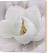 Beautiful Magnolia Bloom Wood Print