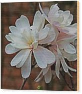 Beautiful Magnolias Wood Print by Victoria Sheldon