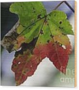 Beautiful Maple Leaf Wood Print