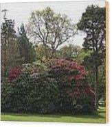 Beautiful Muckross Gardens In Spring Wood Print