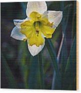Beautiful Narcissus Wood Print