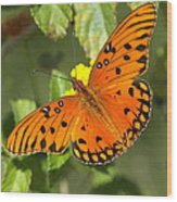 Beautiful Orange Butterfly - Gulf Fritillary Wood Print