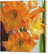 Beautiful Orange Gladiolus Wood Print