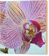 Beautiful Orchid Wood Print