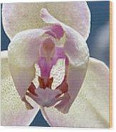 Beautiful Orchid Wood Print by Dana Moyer