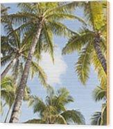 Beautiful Palms Wood Print
