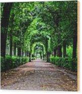 Beautiful Park At Schonbrunn Palace In Vienna Austria Wood Print