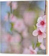 Beautiful Peach Flower Against Blured Background Wood Print