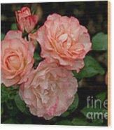 Beautiful Peach Roses Wood Print