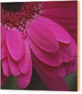 Beautiful Petals Wood Print