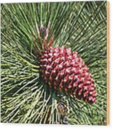 Beautiful Pine Wood Print