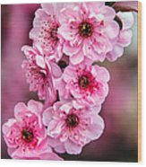 Beautiful Pink Blossoms Wood Print by Robert Bales