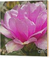 Beautiful Pink Cactus Flower Wood Print